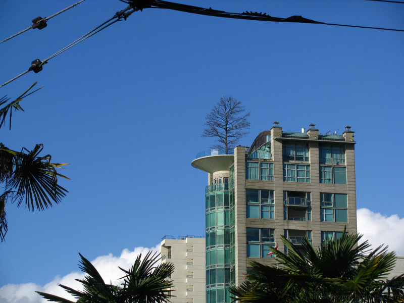 blue sky afternoon