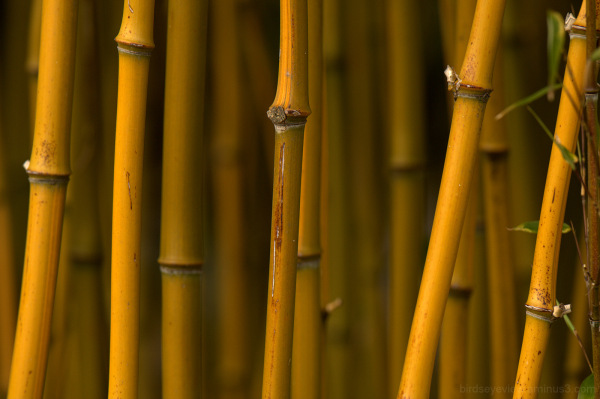 mini bamboo forest