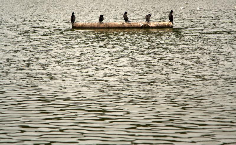 lost lagoon languishing