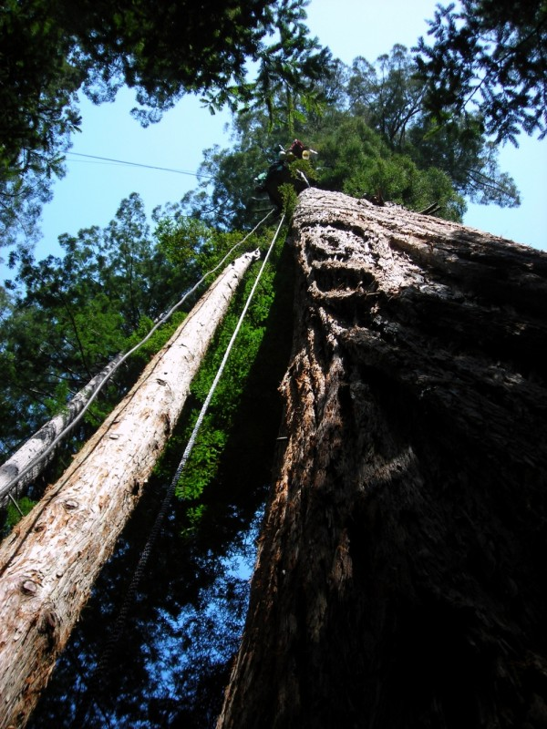 Fern Gully Tree Village in Freshwater, California