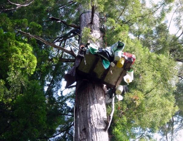 Platform in Tree at Fern Gully tree-sit