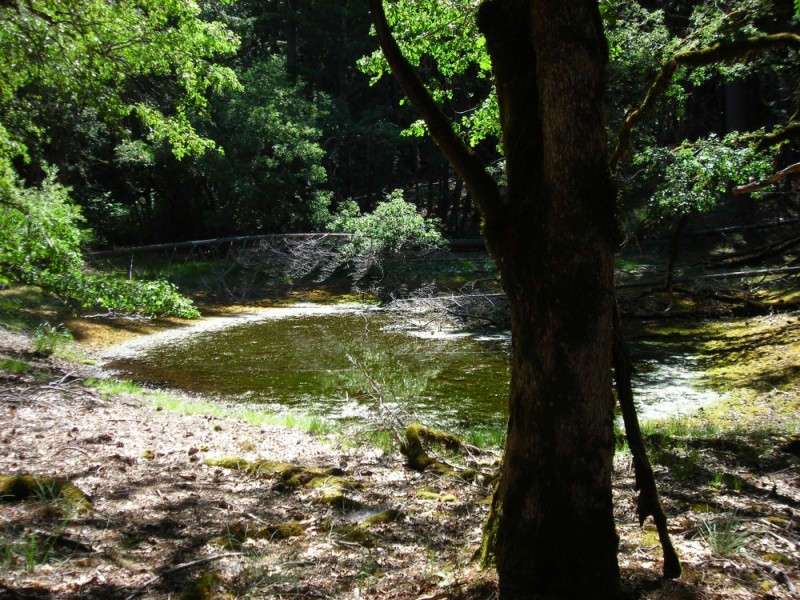 Pond in the forest of Northern California