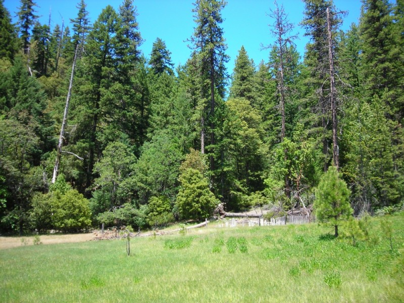 A meadow in the National Forest
