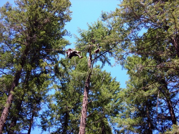 Tree-sitter in Trinity County, California