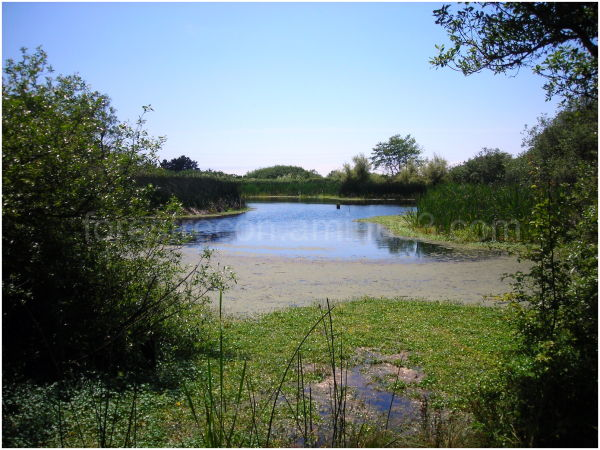 Arcata Marsh in Humboldt County. California