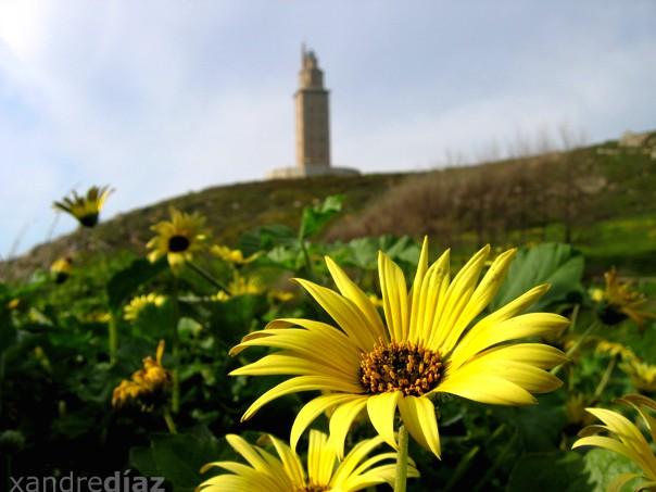 Primaveira na Torre de Hércules