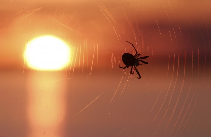 Spiders can enjoy sunsets