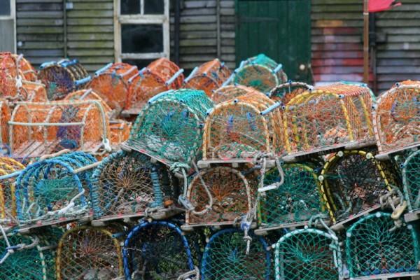 Lobster nets #2