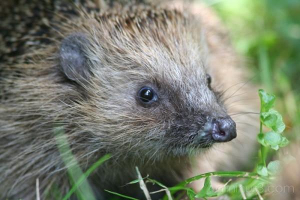 Hedgehogs #2