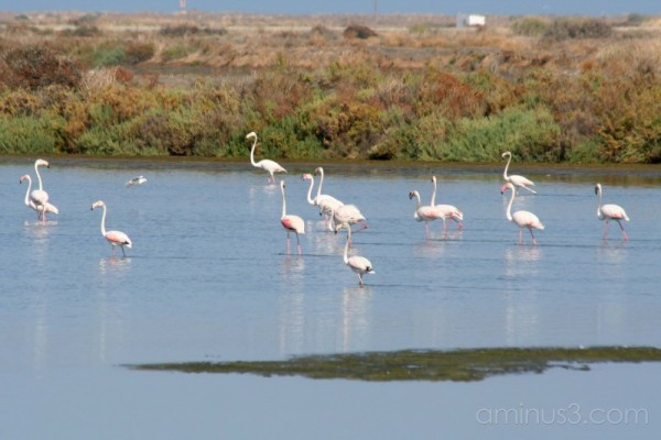 Flamingo's in Portugal