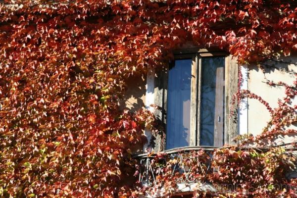 Nature takes over (Venice, November 2007)