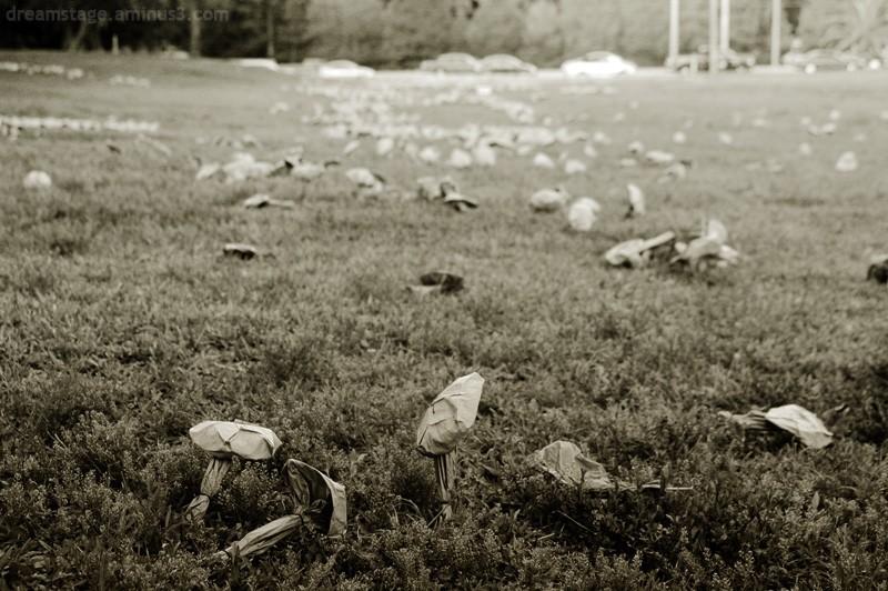 paper mushroom field