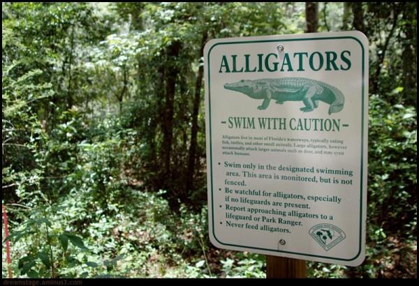 alligator notice