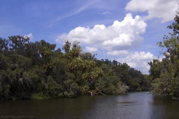 river florida blue springs