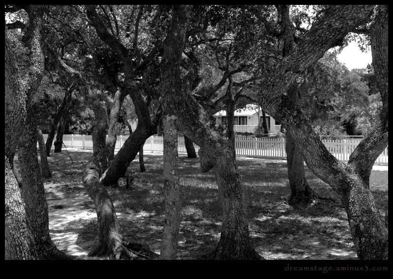 ponce inlet trees