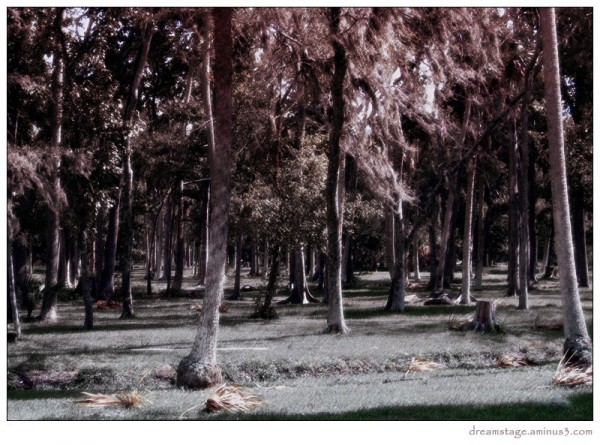 daytona park