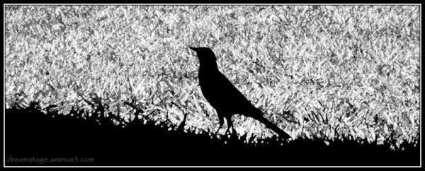 bird silhouette on the grass