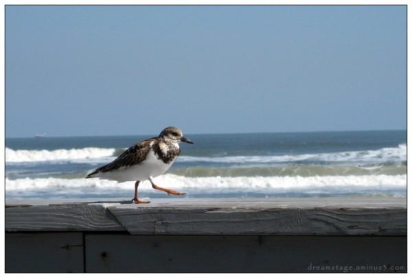 beach bird