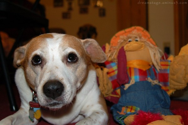 ginger with stuffed animal