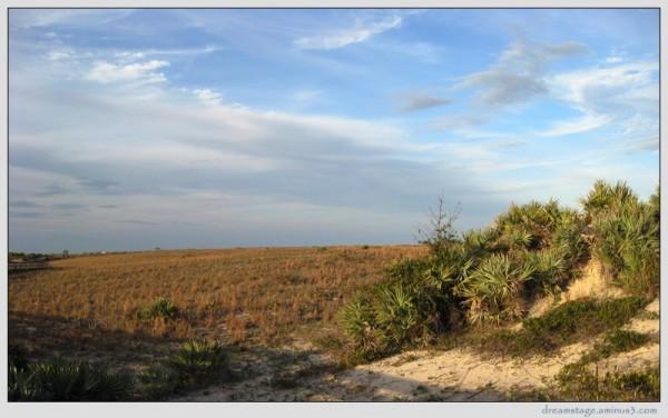 new smyrna beach park dunes