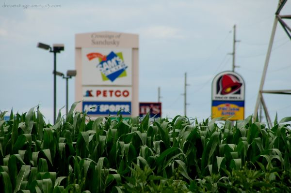 Suburban Corn