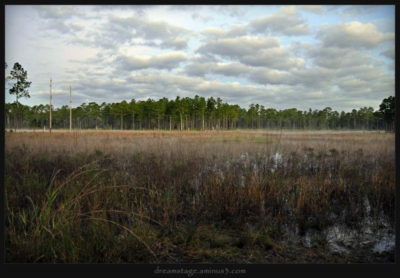 Duck Pond 7