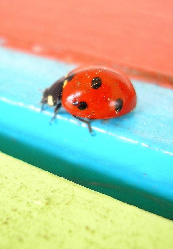 ladybird #2