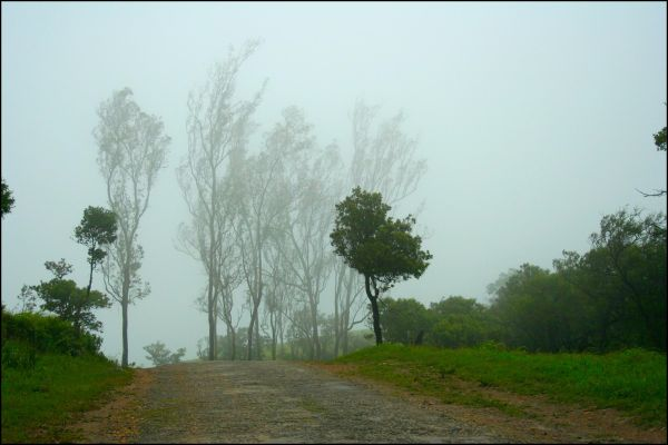 Trees in the mist.....