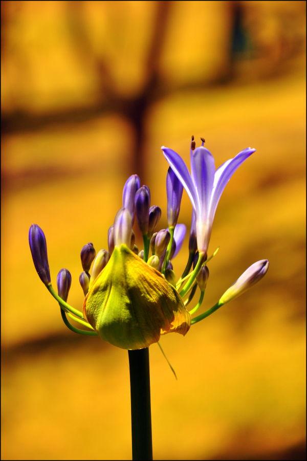 Flower................