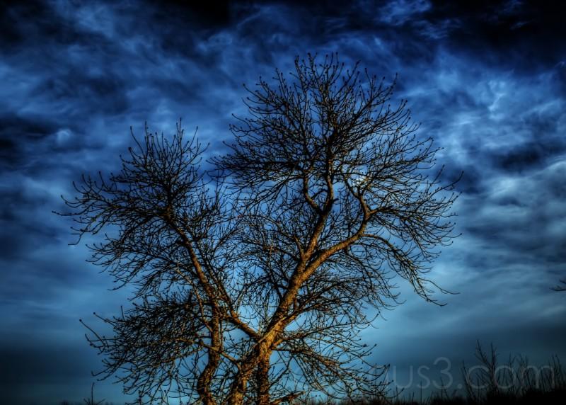 The Evil Tree