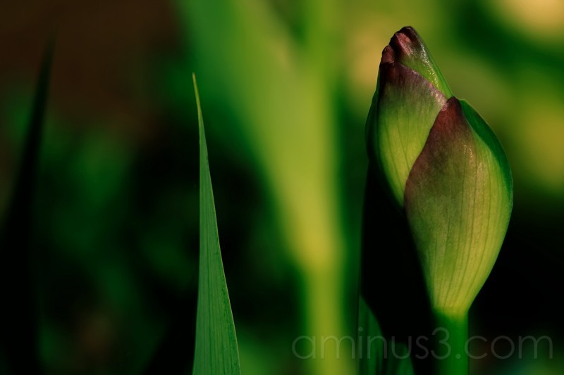 Almost Iris