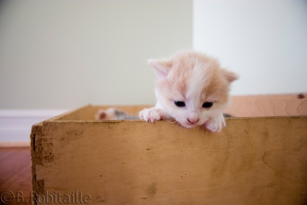 kitten Exploring a new world