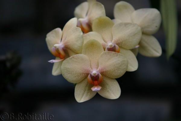 Orchid / Orchidée