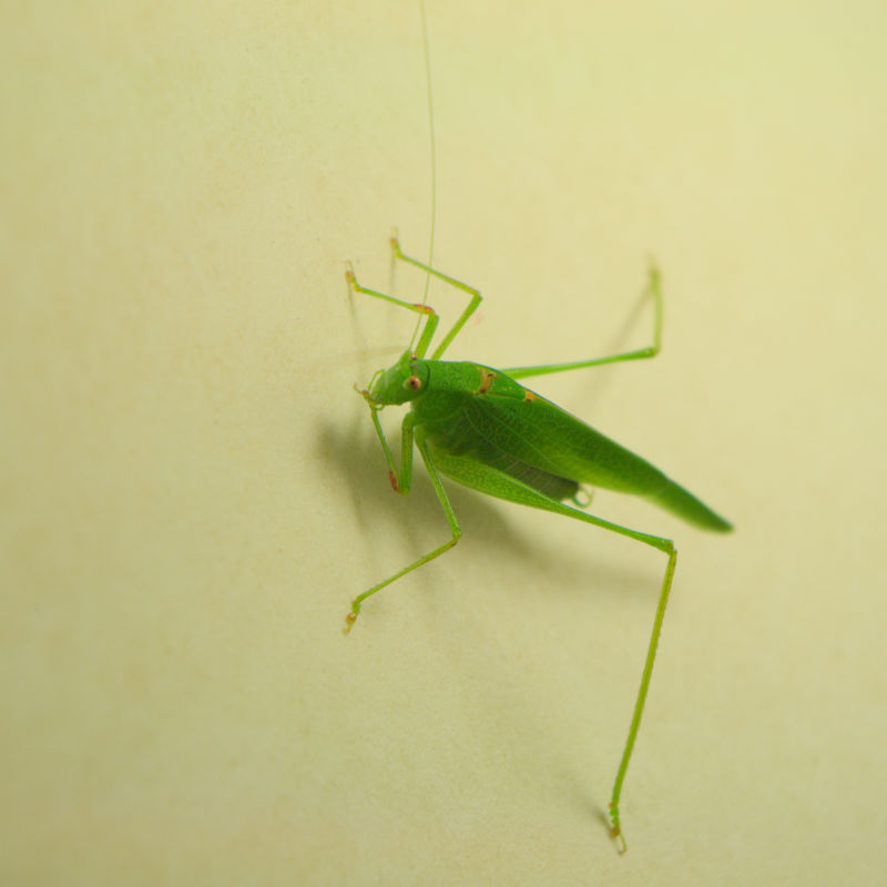 The Green Insect - L'insecte vert