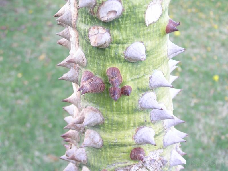 Sharp tree 2