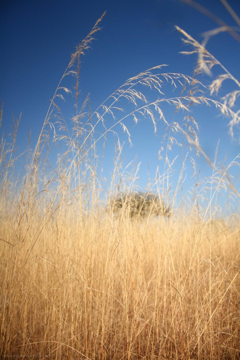 field, tree, sky, sun