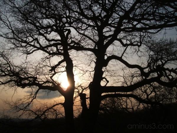 Streatham Common sunset tree shadow london evening