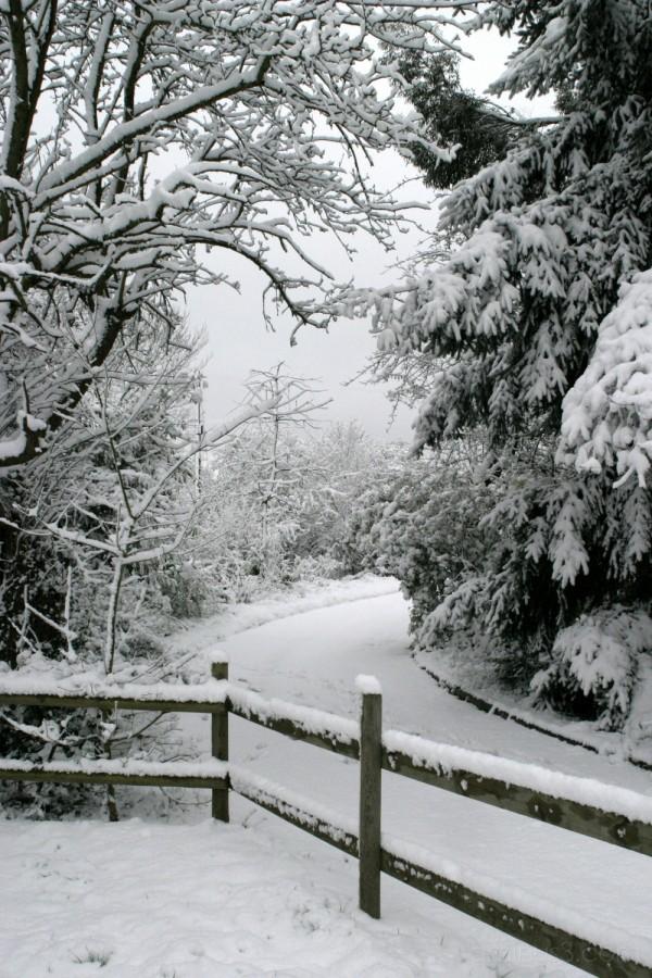 Snowy  driveway by Craig Brophy