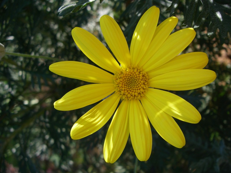 athens flower