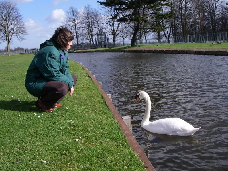 do you speak swan?