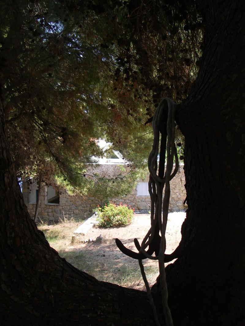 tree+anchore