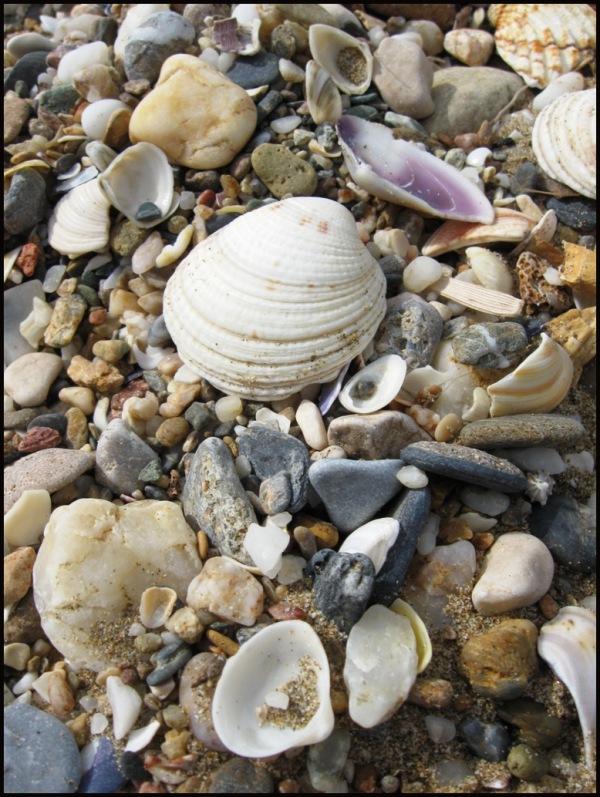 Thracian shells 1