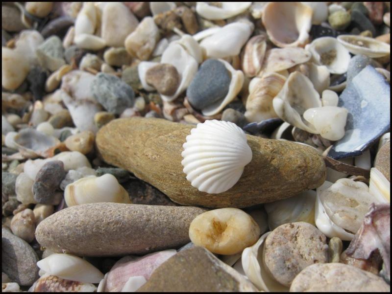 Thracian shells 2