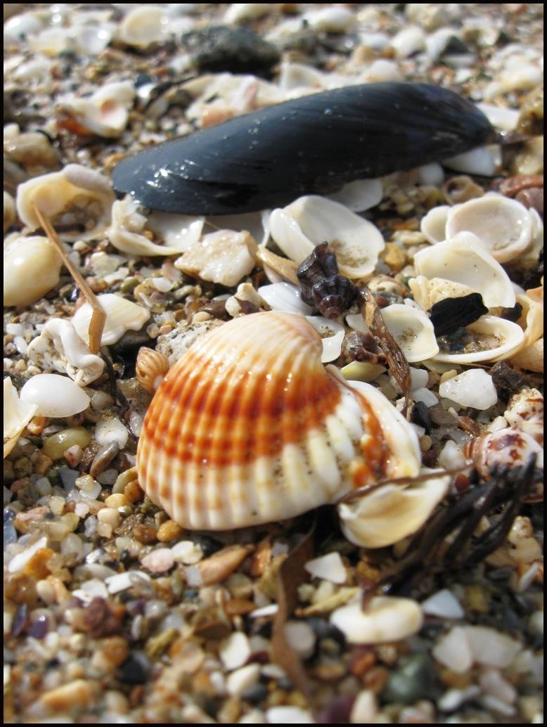 Thracian shells 4