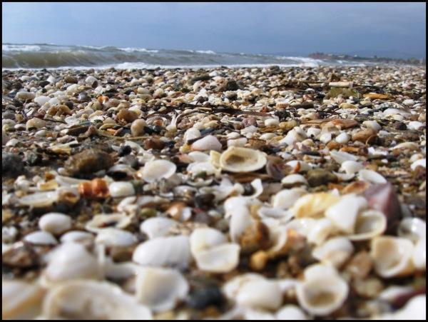 Thracian shells 6