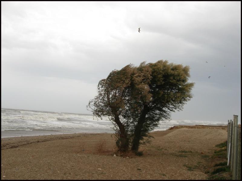 windy?