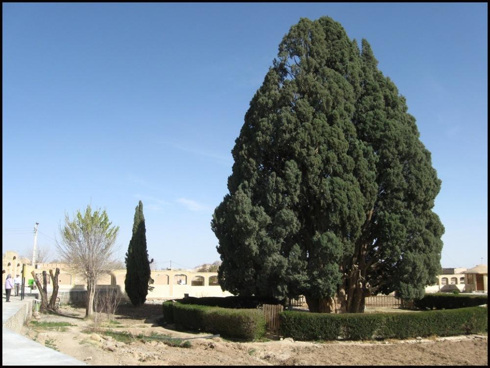 oldest in Iran