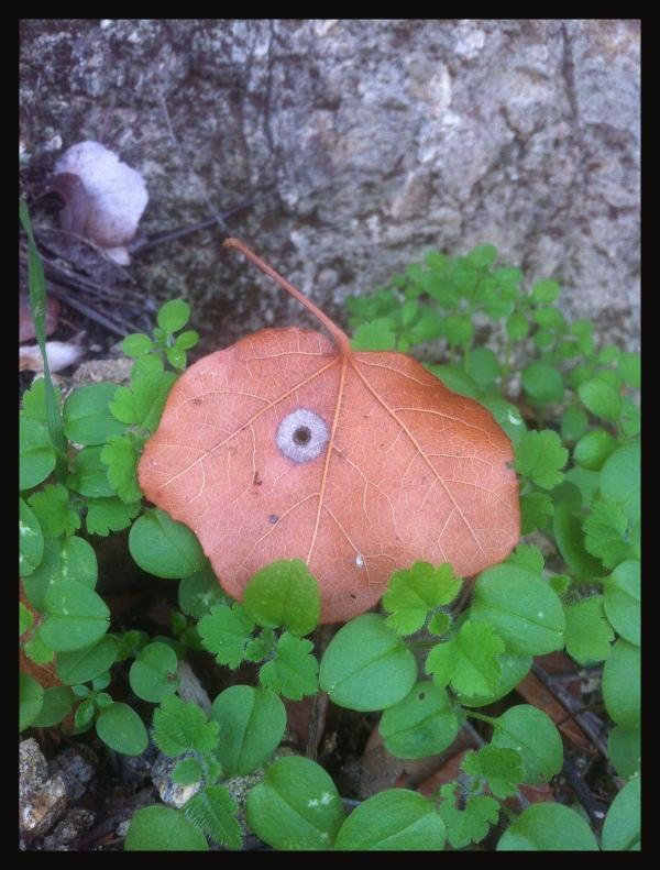 one eyed visitor