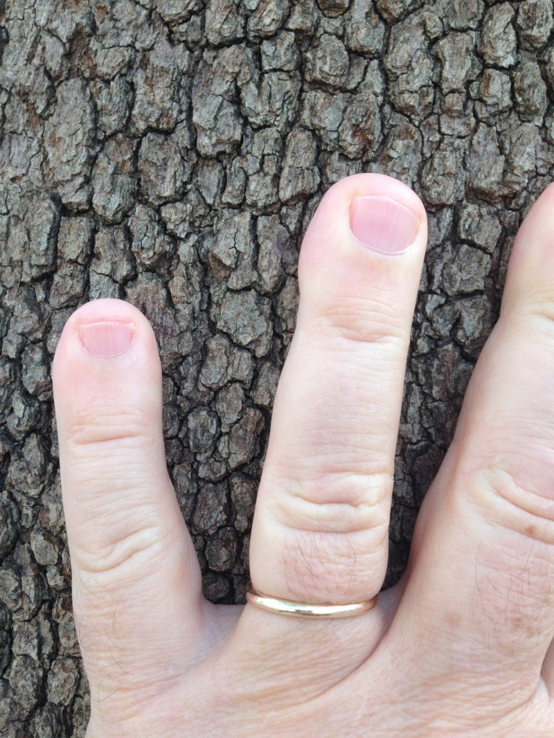 tree friend