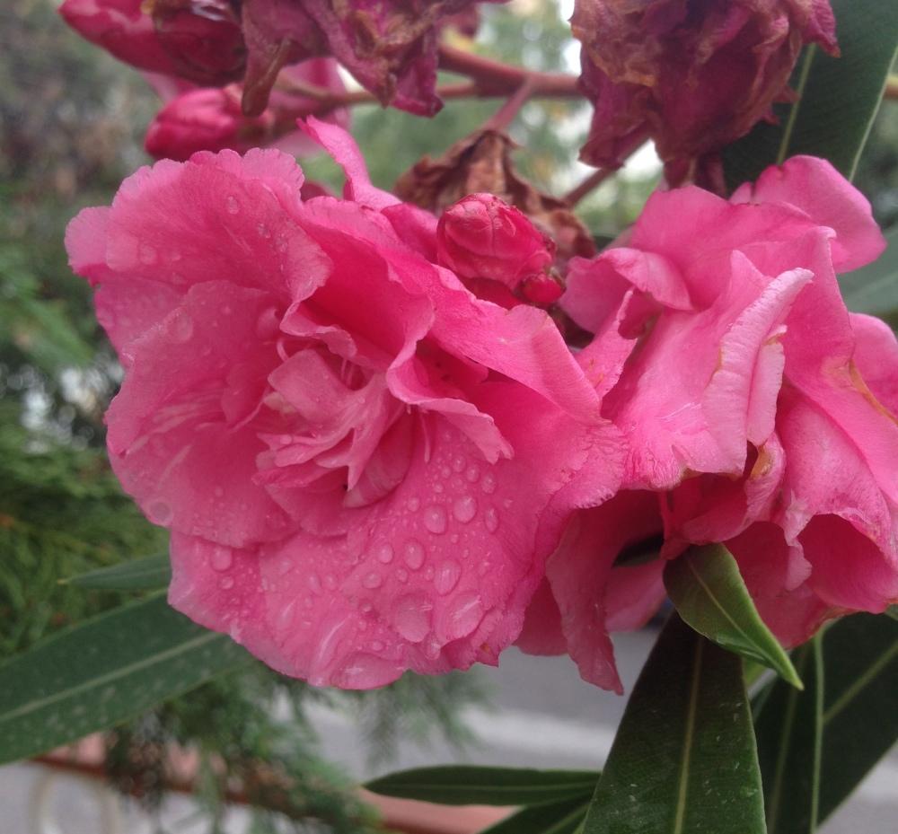 flamenco dancer in the rain